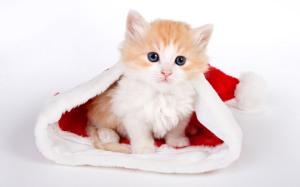 Santa Claus just is a kitten in an over-sized hat.